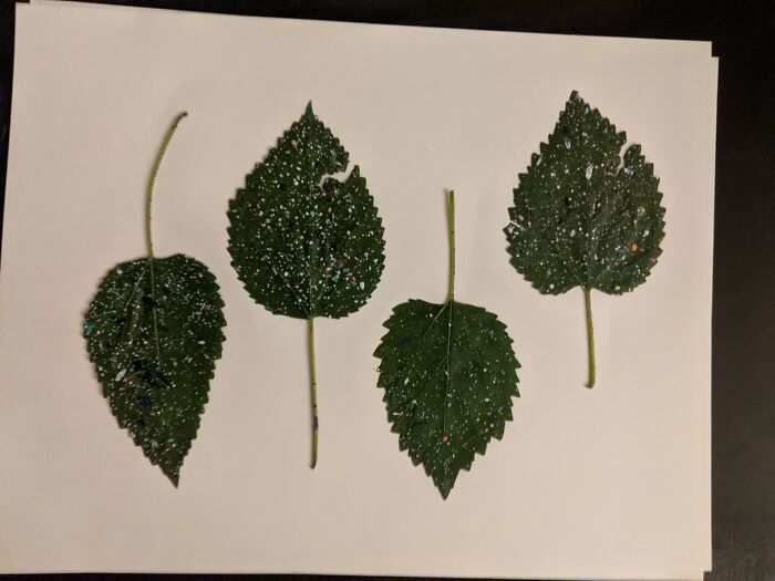 Did Some Painting Outside, And Splatter Happened So I Kept And Preserved These That Leaves.