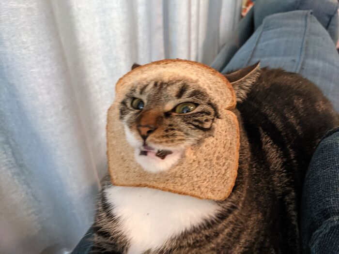 She Did Not Like The Bread 🍞