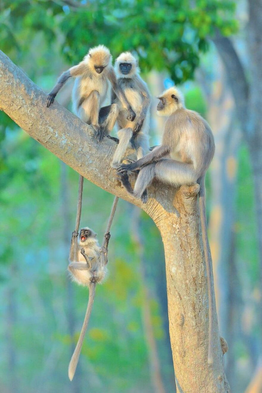 """""""Fun For All Ages"""" By Thomas Vijayan"""