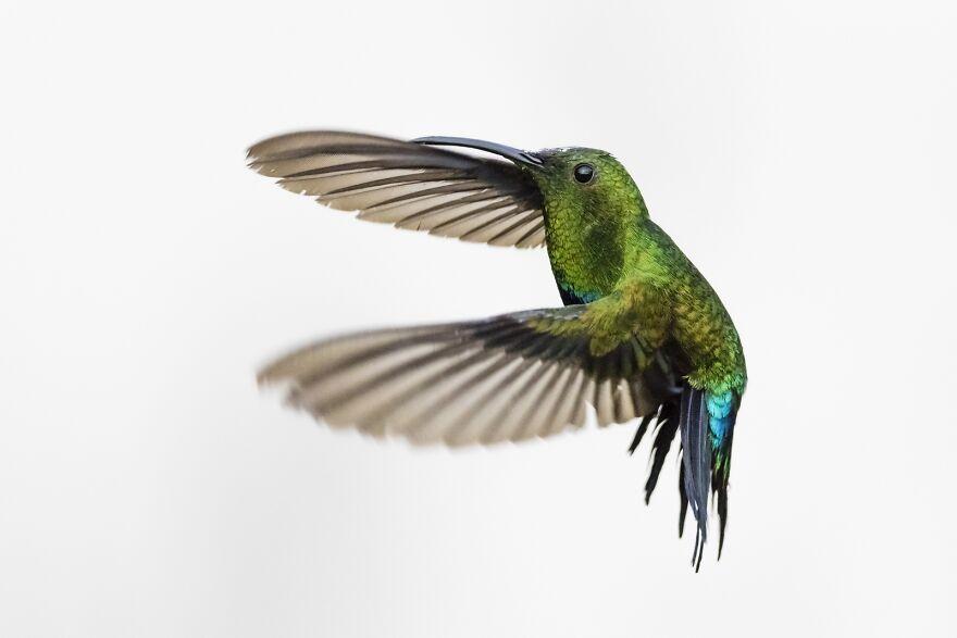 High Key Hummingbirds