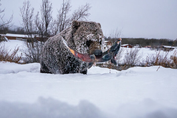 Photo Story: Out Of The Ordinary: 'Klukshu Ice Bears 4/6' By peter Mather, Yukon Territory, Canada