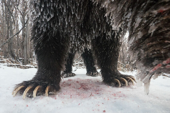Photo Story: Out Of The Ordinary: 'Klukshu Ice Bears 5/6' By peter Mather, Yukon Territory, Canada
