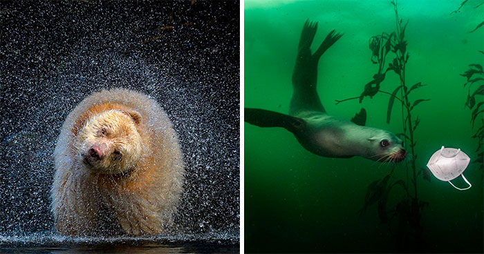The 2021 BigPicture Natural World Photography Contest Reveals The Best Shots Of Mother Nature (30 Pics)