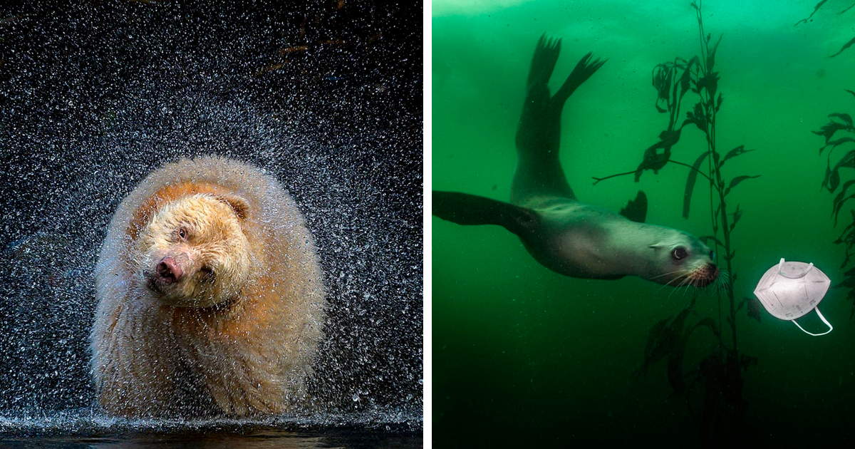 49 Of The Best Shots From The 2021 BigPicture Natural World Photography Competition