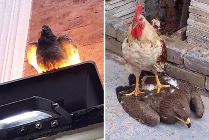 """35 'Cursed' Pictures Of Birds Shared By """"Birds With Threatening Auras"""""""