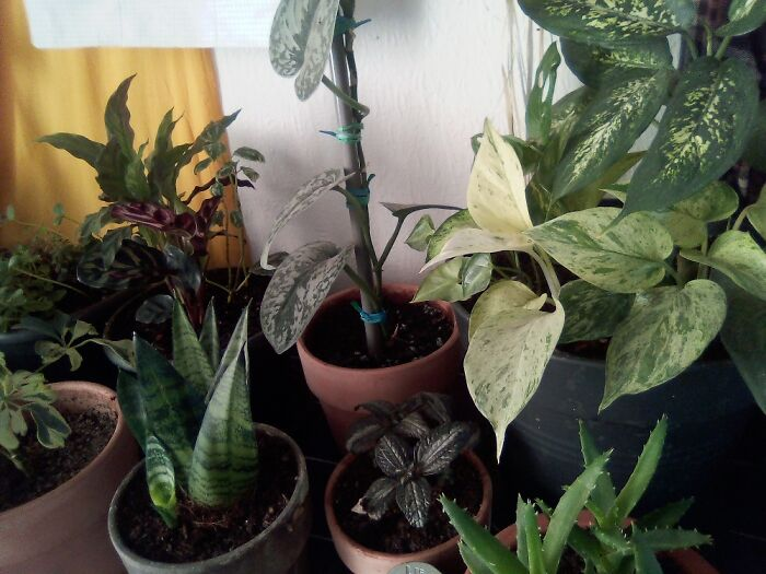 Plants !!! Almost 40 Baby Indoor Plants. Many Were Found And Saved. Here Is A Small Sample