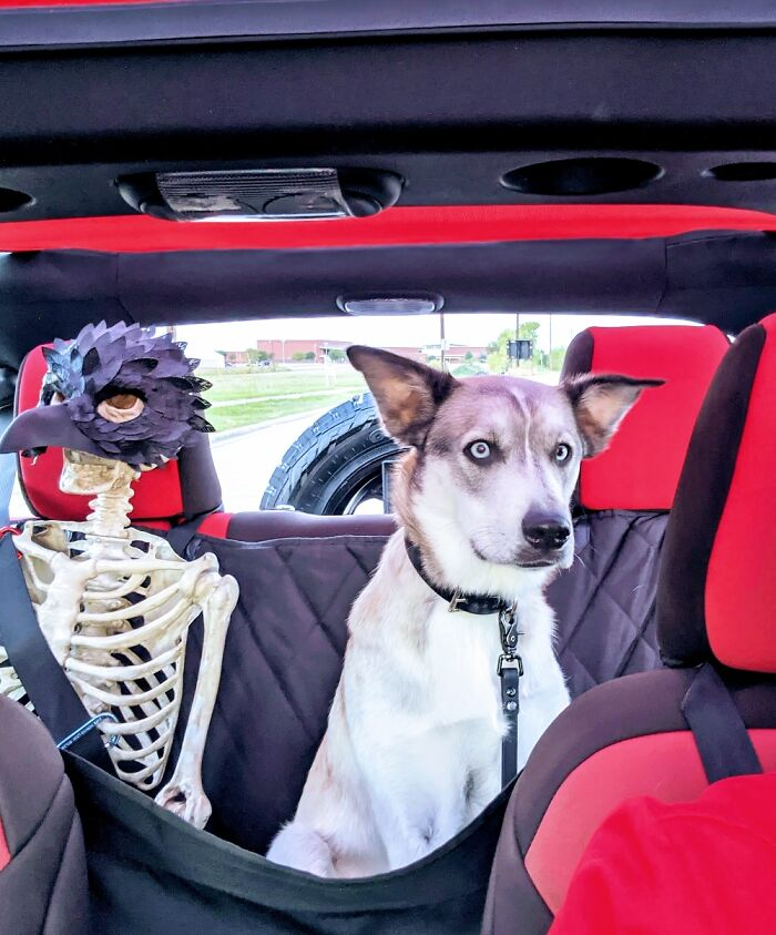 My Skeleton That Rides In The Jeep. The Dog Clearly Hates It