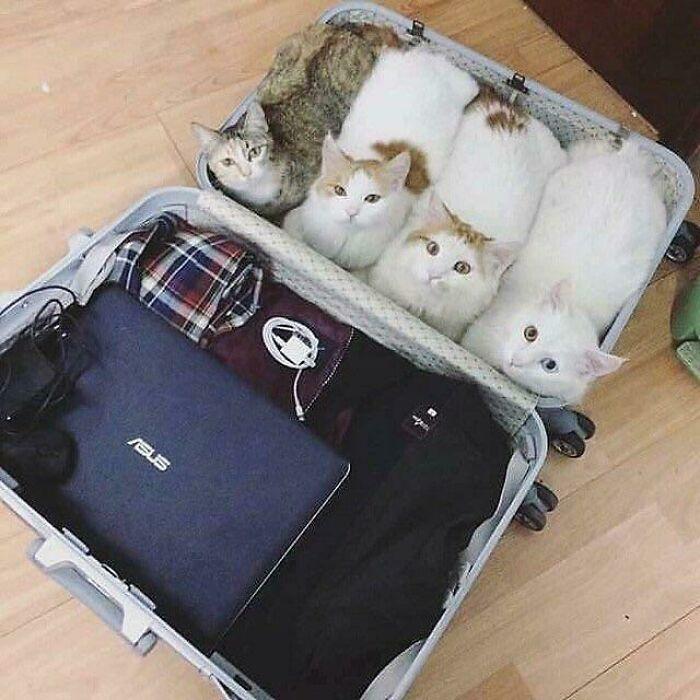 No olvides empacar tus hogazas