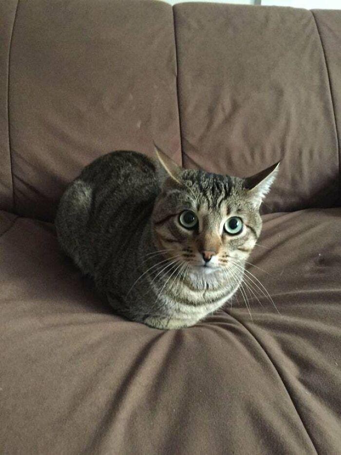 Hay una hogaza en mi sofá. Es de la novia de mi compañero de piso