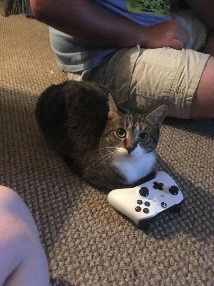 ¿Puedo jugar?