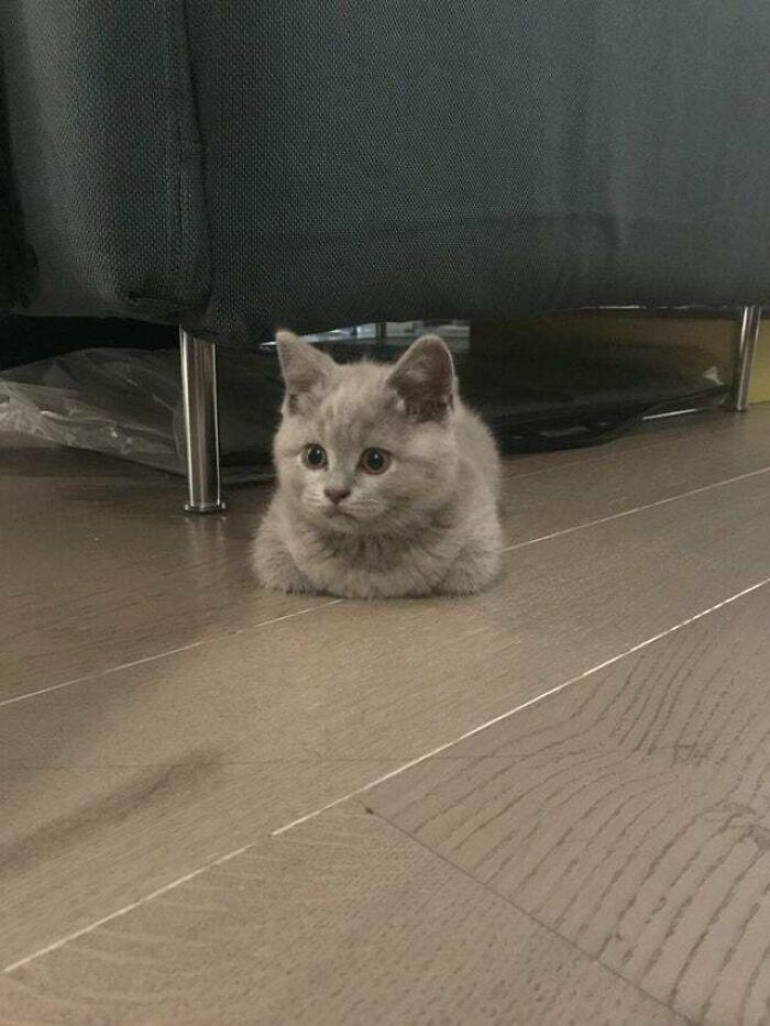 Mi nuevo gato hogaza, ha llegado hoy