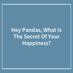 Hey Pandas, What Is The Secret Of Your Happiness?