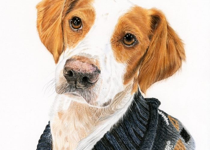 I've Made A Painting Of A Shelter Dog From Spain That Now Lives In Scotland
