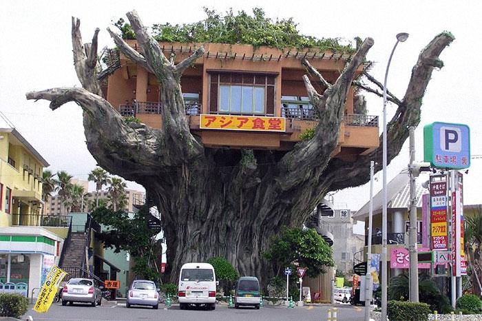Restaurante de la casa del árbol (demolido), Okinawa