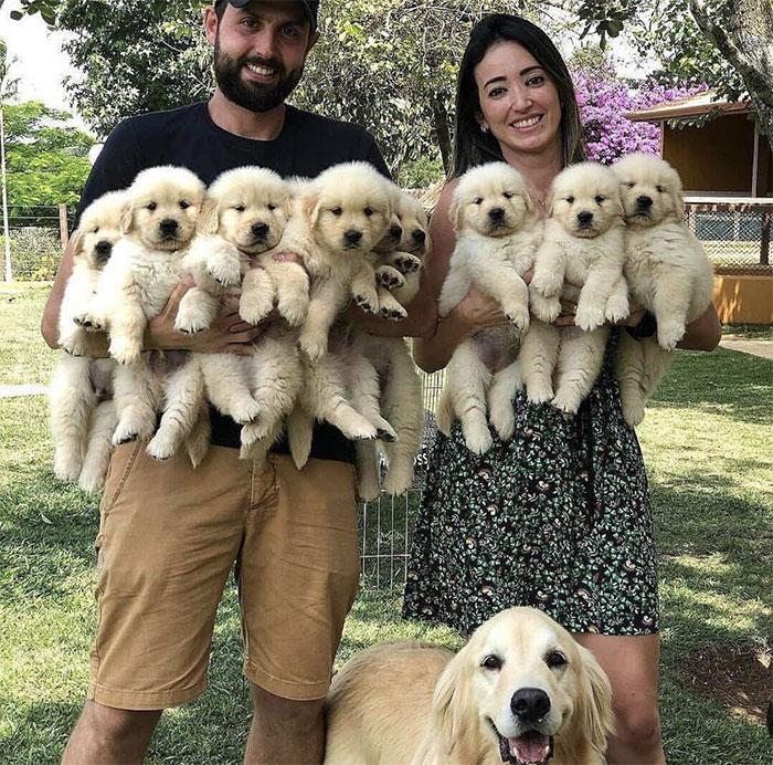 Este es el número exacto de cachorritos que quiero en mi vida