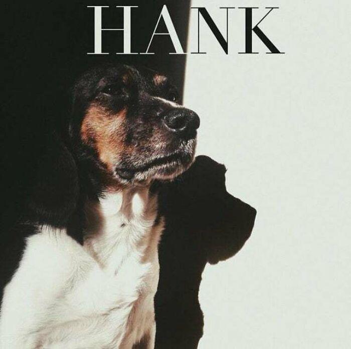 My Dog's Self Titled Debut Album - Hank