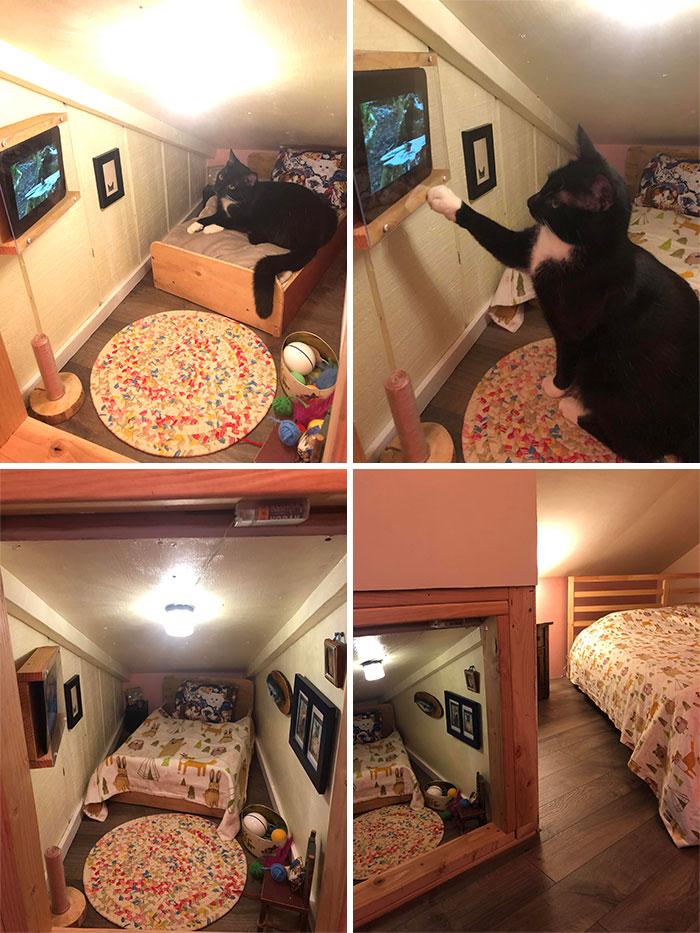 Cat Bedroom Is Complete. Birb TV Is On