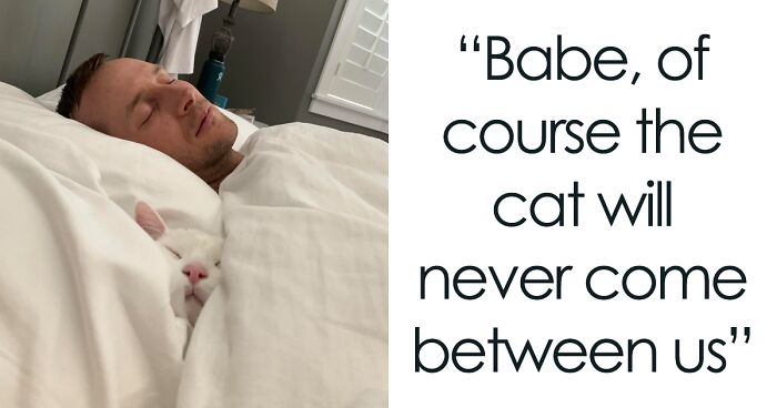 50 Spoiled Cats That Probably Live Better Than You (New Pics)
