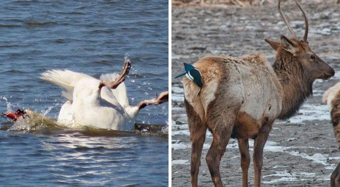 Este grupo de Facebook está dedicado a fotos cutres de fauna, y son tan malas que tienes que reírte (50 nuevas fotos)