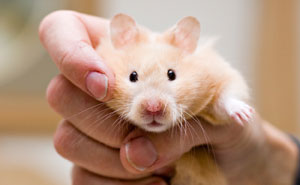 51 People Shared How Their Hamsters Met Their End And It's So Sad That It's Actually Funny