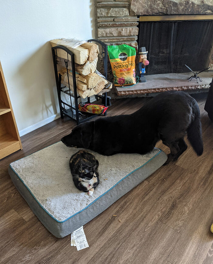 Duke Trying To Share His Bed With Pennywise