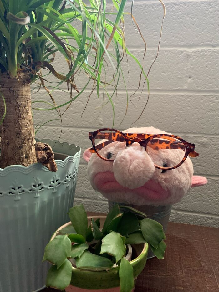 I Use Blobby The Blobfish As A Reading Glasses Holder So I Always Know Where To Find Them.