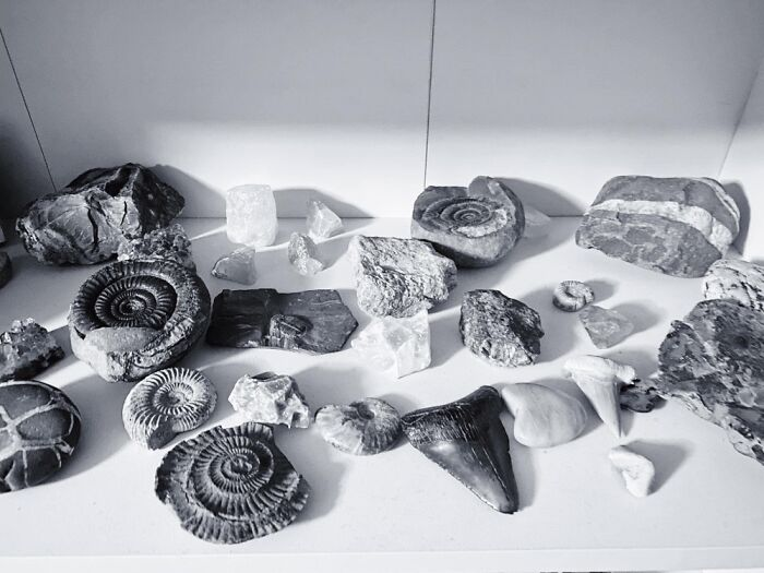 I Collect Rocks And Fossils