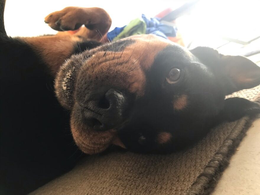 Derpy Doggy Upside-Down (She Always Looks Crazy Like This!)