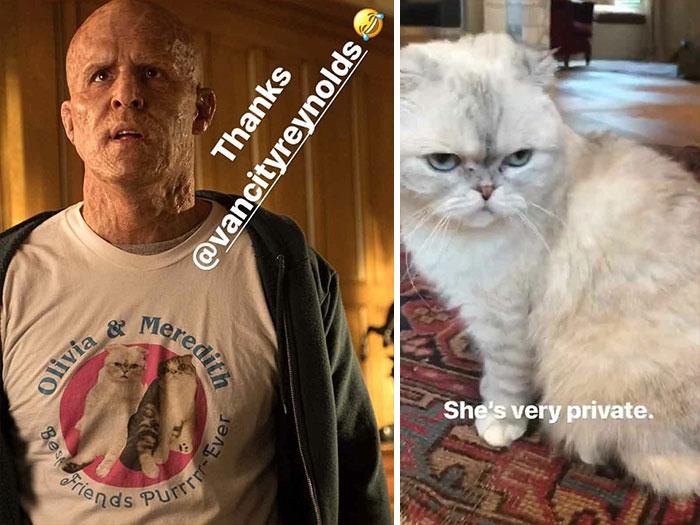 """En Deadpool 2 (2018), Wade lleva una camiseta que dice: """"Olivia y Meredith. Best Friends Purrrr-Ever"""". Los dos gatos pertenecen en realidad a Taylor Swift. El equipo de producción tuvo que obtener permiso de ella para usar su imagen"""