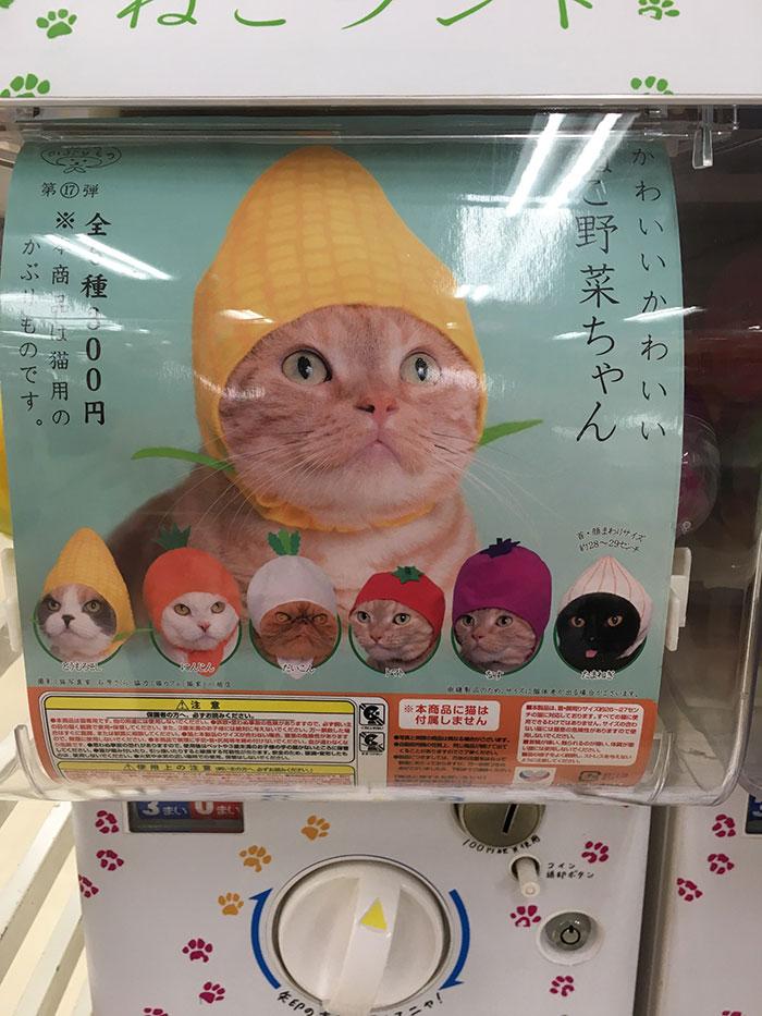 Máquinas expendedoras de sombreros para gato en Japón