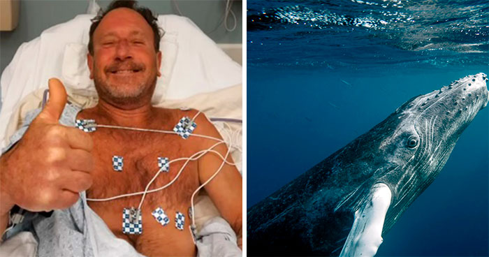 Here Are The 30 Best Answers To Questions That People Asked A Man Who Survived Being Trapped In A Humpback Whale's Mouth