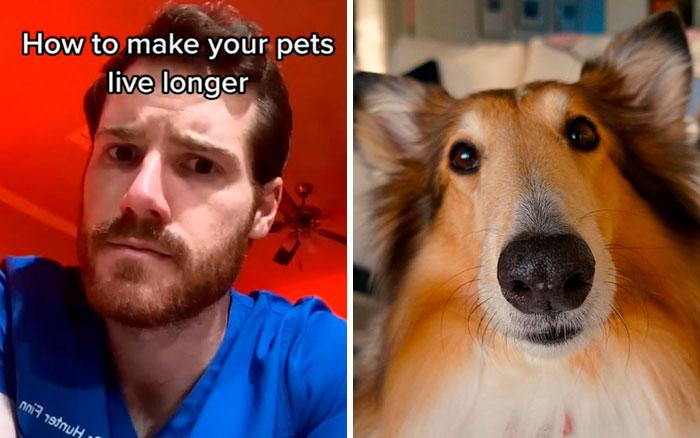 Pet-Care-Tips-Vet-Hunter-Finn-Tiktok