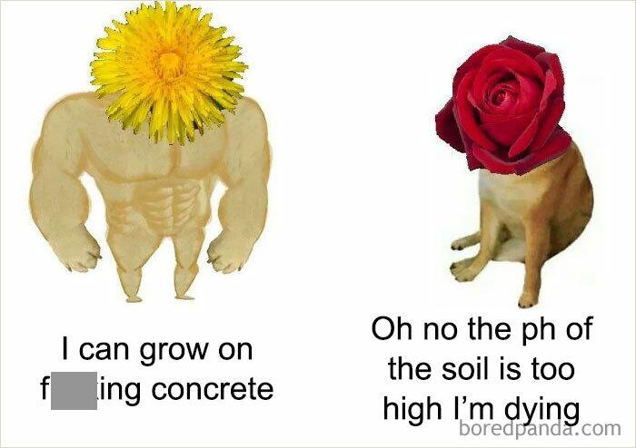 Dandelion Strong