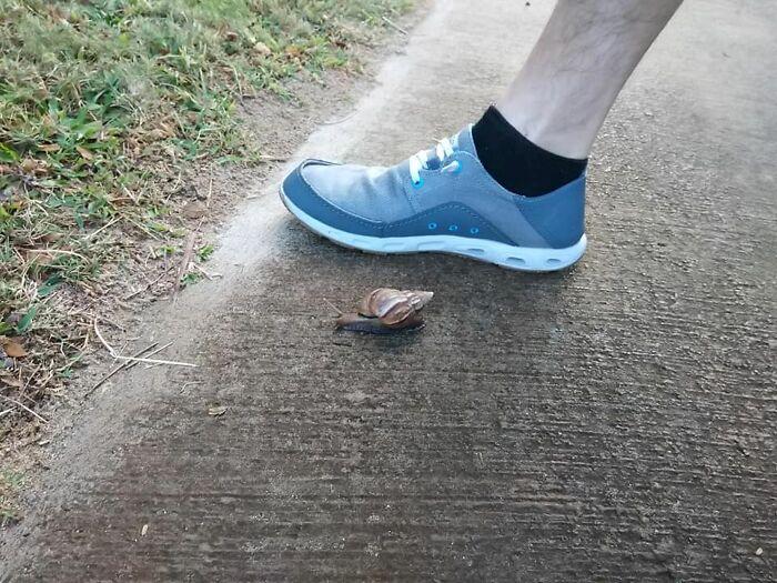 A Huge Snail We Saw In Kihei, Hawaii.