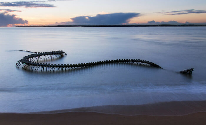Serpent D'océan In Saint-Brevin-Les-Pins, France