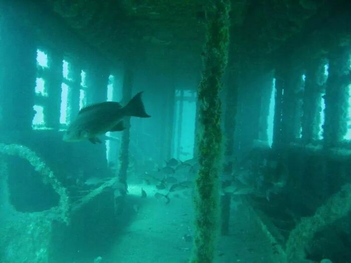 Retired NYC Subway Car Dumped Off The Coast As An Artificial Reef
