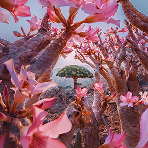 I Visited The Extraordinary Socotra Island, Here Are 43 Pics That I Took