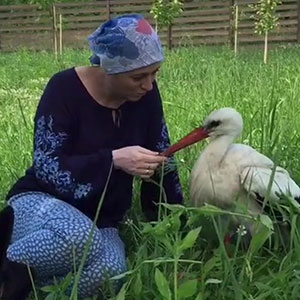 After Damaging His Wing, This Stork Will Never Fly Again, But He Enjoys A Wholesome Life With A Woman Who Rescued Him