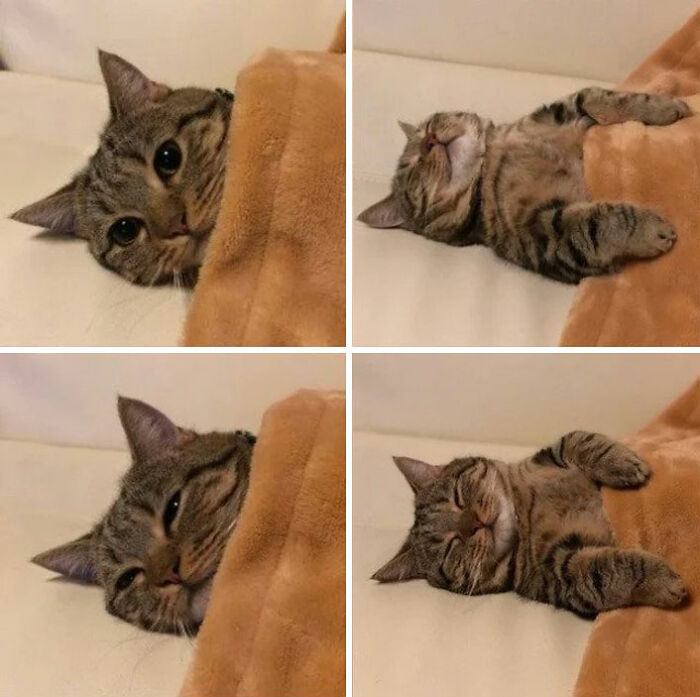 The Ultimate Tucked-In Kitty