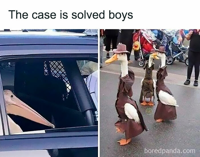 What Crime Did He Commit? |follow @memes.bird (Me) For Daily Bird Memes!| 🔴my Other Accounts: @didyouknowgamingfacts, @bestofgamingmemes, @featured.memes, @memes.birds (Backup) - #bird #birds #birb #birbs #birdmeme #birdmemes #birbmeme #birbmemes #meme #memes #bestmemes #funny #lol #haha #hilarious #dankmemes #funnymemes #dankmeme #funnymeme #animal #animals #animalmeme #animalmemes #nature #wholesome #wholesomememes #pet #pets #cute #ducks