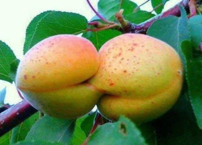 Naughty Pears