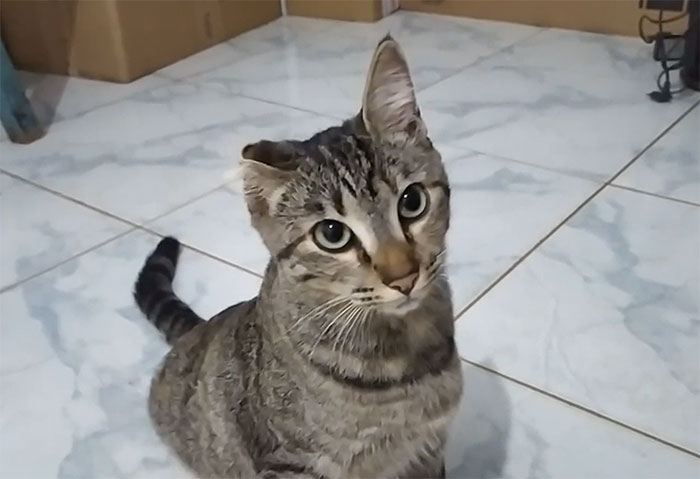 How Should I Name Her? She Appeared Today On My House And Adopted Me, And She's Missing One Ear, But Seems To Be Healthy And Plays With Anything That Moves