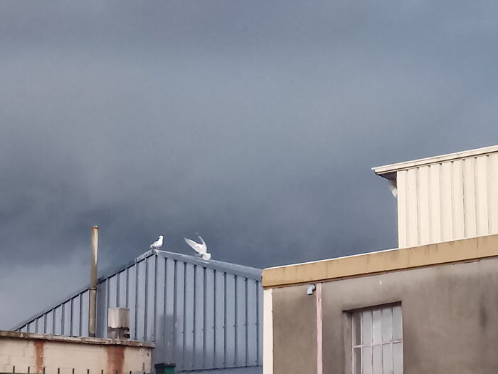This Seagulls, Just Before A Storm, No Photoshop, Just Insane Sky And Light And Factory Buildings. Man vs. Wild.