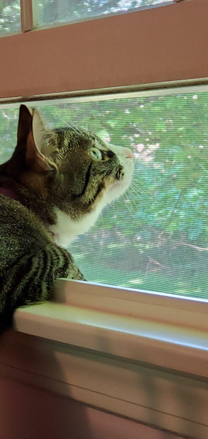 My Bird Watching Cat