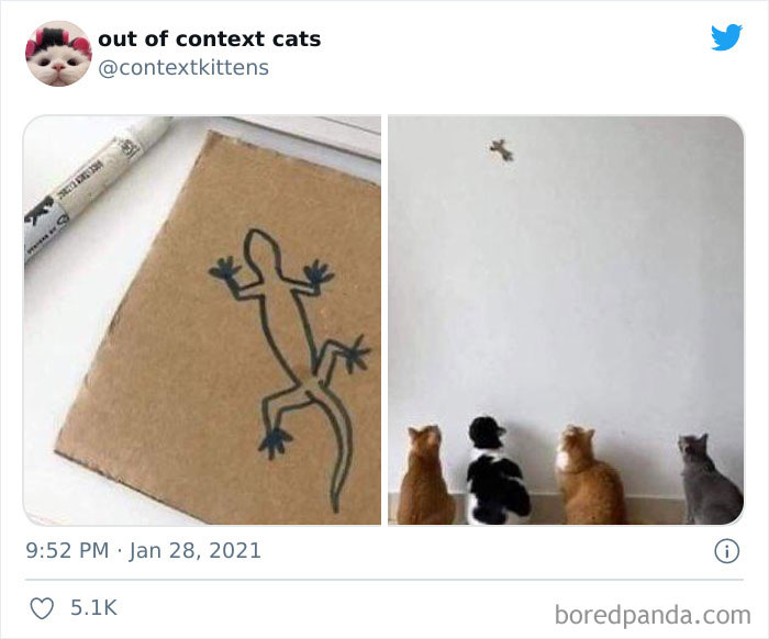 Out-Of-Context-Cat-Pics