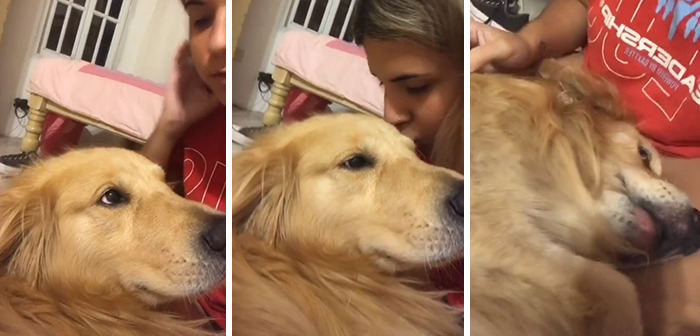 The Owners Staged A Flash Mob And Showed How Their Pets Reacted To Receiving An Unexpected Kiss On The Forehead
