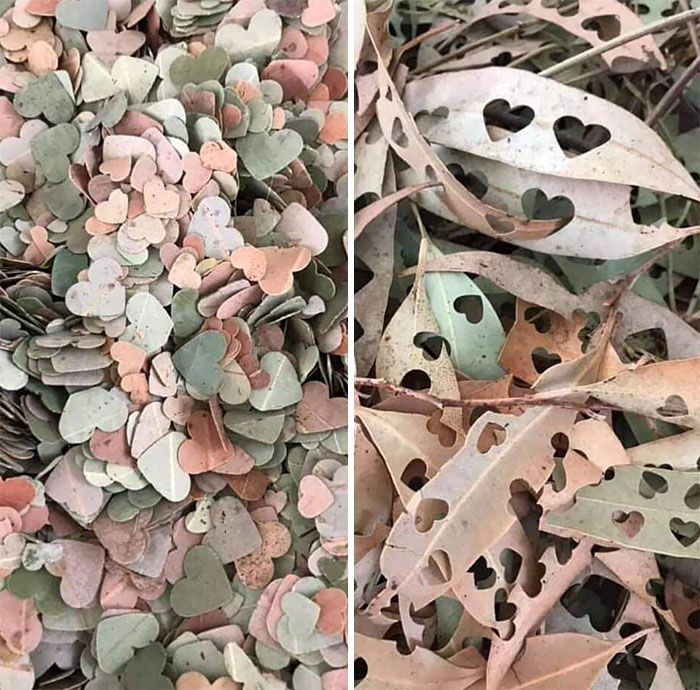 Instead Of Polluting The Planet With Confetti, Hole Punch Leaves! Fully Biodegradable