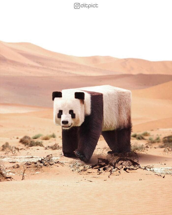 What If… Real Animals Were Cubic Shaped Animals From The Minecraft Game? (22 New Pics)