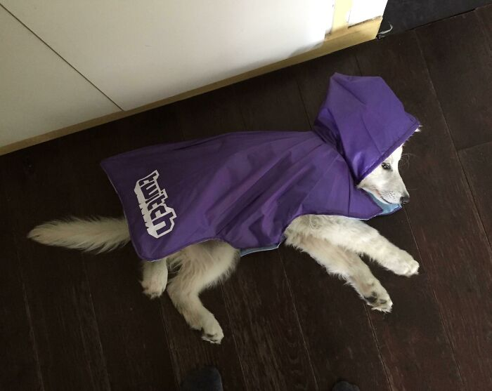 A Raincoat For My Dog Made Out Of A Broken Promotional Umbrella (She's Not Impress)