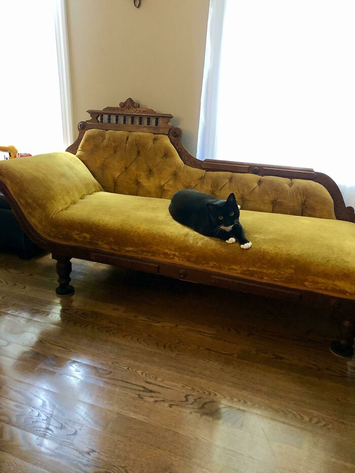 I'm Moving Into My First House And Snagged This Couch Off Fb Marketplace For $60. Kitty Approves!